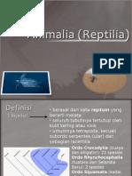Animalia (Reptilia)