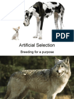 artificial selection presentation