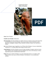 Fact Sheet Birds of Paradise