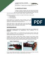Dunia Usaha & Investasi-Budidaya Lobster Air Tawar