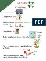 Las Plantas 2º