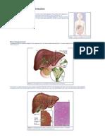 Cholangio Carcinoma