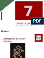 Tema 7 Genoma y ADN