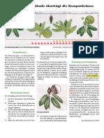 0654-Zikade.pdf