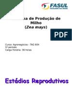 MILHO - ESTAGIOS REPRODUTIVOS + CULTIVARES