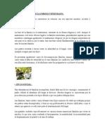 Caracteristicas de La Familia Venezolana