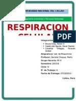 Informe 8 - Respiración