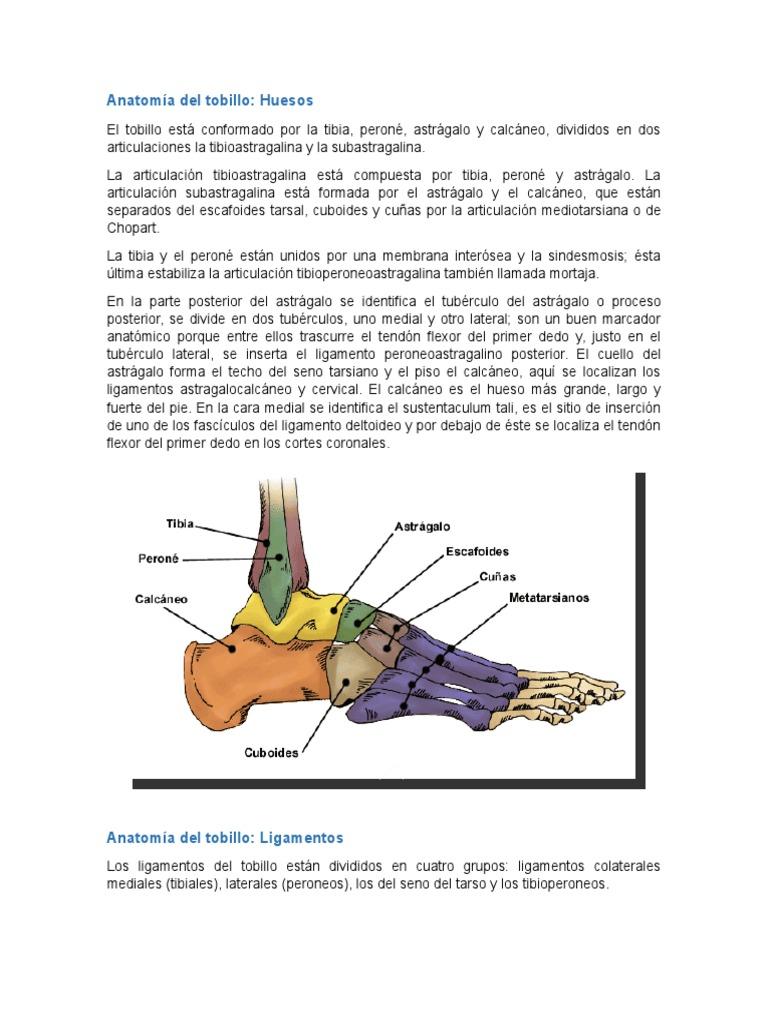 Anatomía Y Fisiologia Del Tobillo