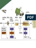 Producción Bioquímica de Cerveza