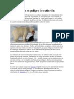 conciencia osos polares