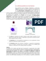 Formas para prevenir y eliminar parásitos en el ser humano.docx