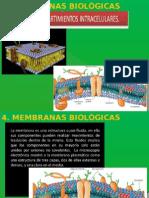 bloque 4 Membranas