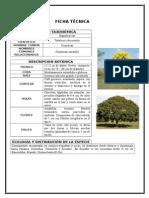 Ficha técnica del Guayacan Amarillo