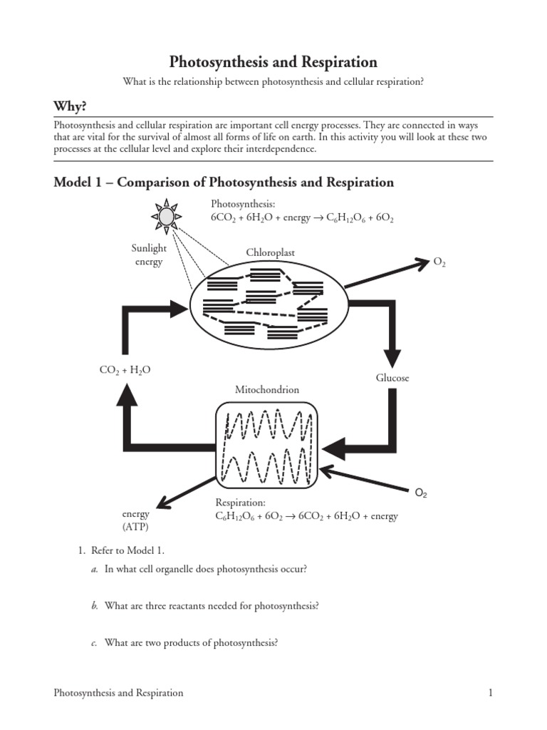 pogil photosynthesis and respiration-s | Photosynthesis ...