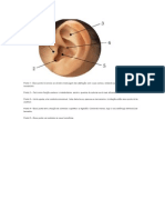 Acumpuntura Auricular