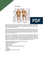 Struktur Organisasi Tubuh Manusia