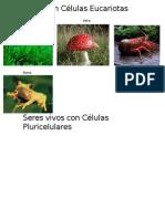 Seres Con Células Eucariotas