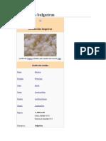 Lactobacillus bulgaricus.docx