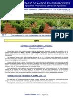 Boletin012014 Enfermedades Fungicas de La Madera