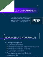 moraxellacatarrhalis-140608230819-phpapp02