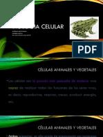 5. Biología Celular II