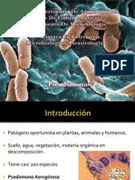 Pseudomona