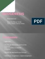 Ovogénesis final (1).pptx