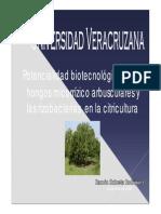 Hongos Micorrízicos y Rizobacterias