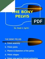 Bony Pelvis