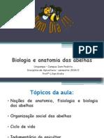 Aula 2 - Biologia e Anatomia Abelhas