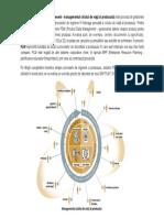 PLM Description Tradus