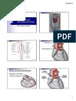 Anatomia Do Sistema Vascular