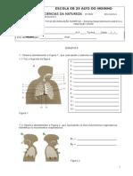 Teste Sistema Respiratorio Circulatorio
