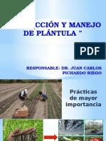 Producción de plantula