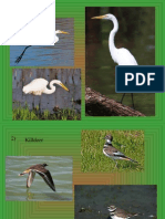 bird id ppt 1 10 only