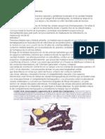Estructura y Función de La Médula Ósea