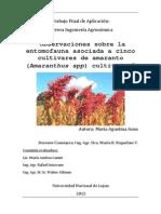 """""""Observaciones sobre la entomofauna asociada a cinco cultivares de amaranto (Amaranthus spp) cultivados"""""""