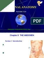 4.the Abdomen