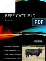 beef cattle id smedley