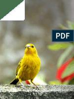 Inventario de aves en el estado Lara,
