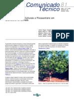 Manejo e Práticas Culturais e Fitossanitário Em Gravioleira No Cerrado