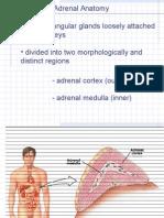 Adrenal Anatomy 101