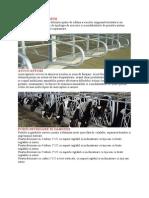 Sistem Crestere Bovine de Lapte