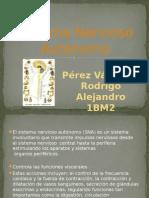 sistemanerviosoautonomo-121018220000-phpapp02