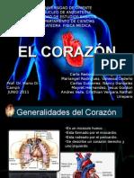 corazon, anatomia y fisiologia cardiaca