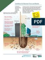 how to plant bareroot
