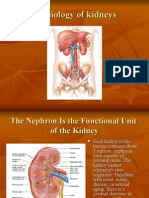 Physiology of The Renal System