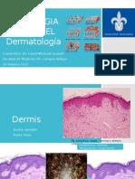 Dermatologia-Histologia, Parte 2