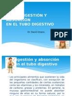 Digestion y Absorcion Tubo Digestivo
