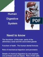 3 3 4 human digestive system